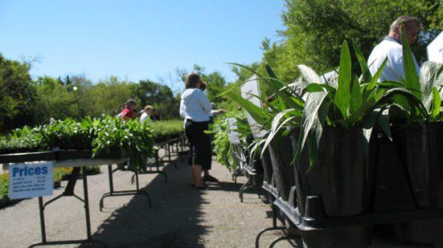 Spring+Plant+Sale
