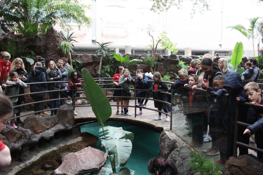 The students watch as the aquarium worker spends time feeding the penguins.